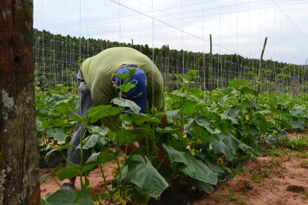 Administração realizará reunião com empresa interessa em investir na agricultura familiar